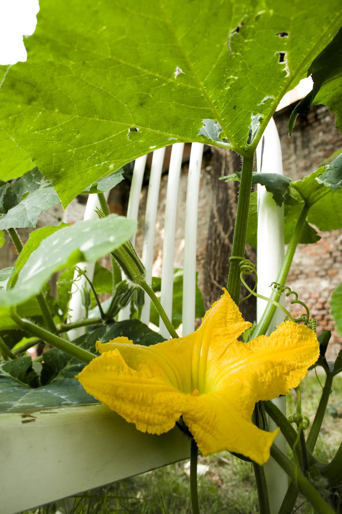 piante e verdure minacciose che molestano cose e persone